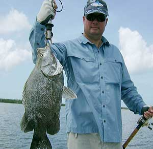 TripleTail from Nov 1st Fishing Charter